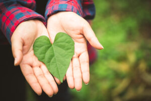 Going Green for a successful advertising campaign