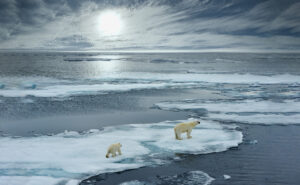 How can I incorporate Climate Change into my Advertising Strategy ?